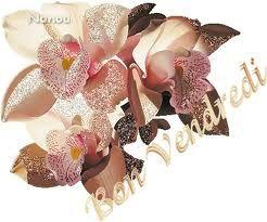 bon vendredi orchidés