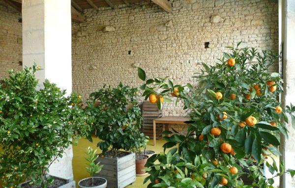 20120602-orangerie3