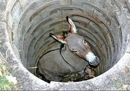 Ane dans le puits