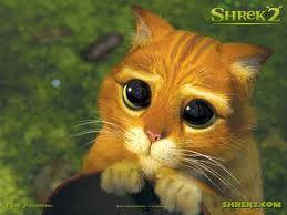 gatito-shrek.jpg