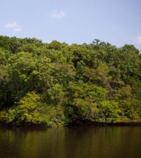 amazonie-la-secheresse-de-2010-a-engendre-1-8-milliards-de-.jpg