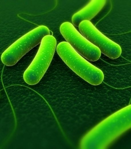 la-bacterie-e-coli_29665_w460--1-.jpg