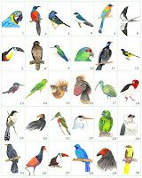 Amazon-Birds-series-web.jpg