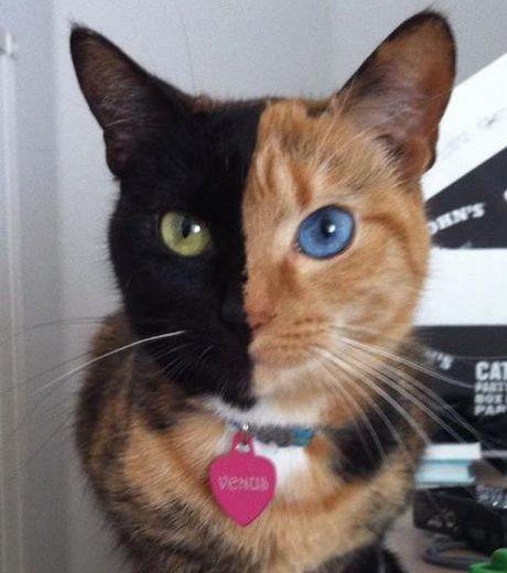 venus-la-chatte-a-deux-visages-devenue-star-du-web-credits-.jpg