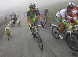 moutons tour de france