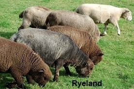 ryeland-wool-colour.jpg