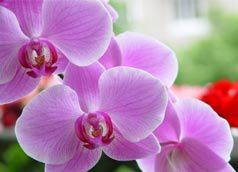 orchidee_s-copie-1.jpg