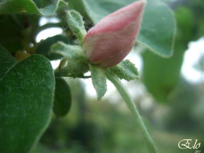 11-avril(18)-fleurs-133