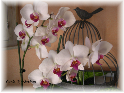 orchidee-toute-fleurie.png