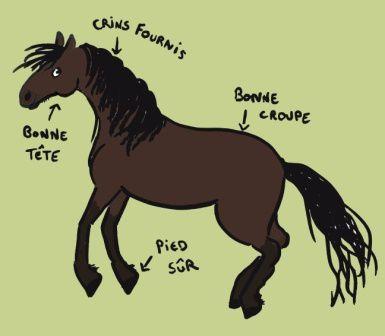cheval d'Auvergne - ER 1
