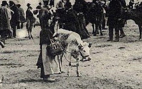 Augeronne---vache--au-centre----Donfront-61---1907.jpg