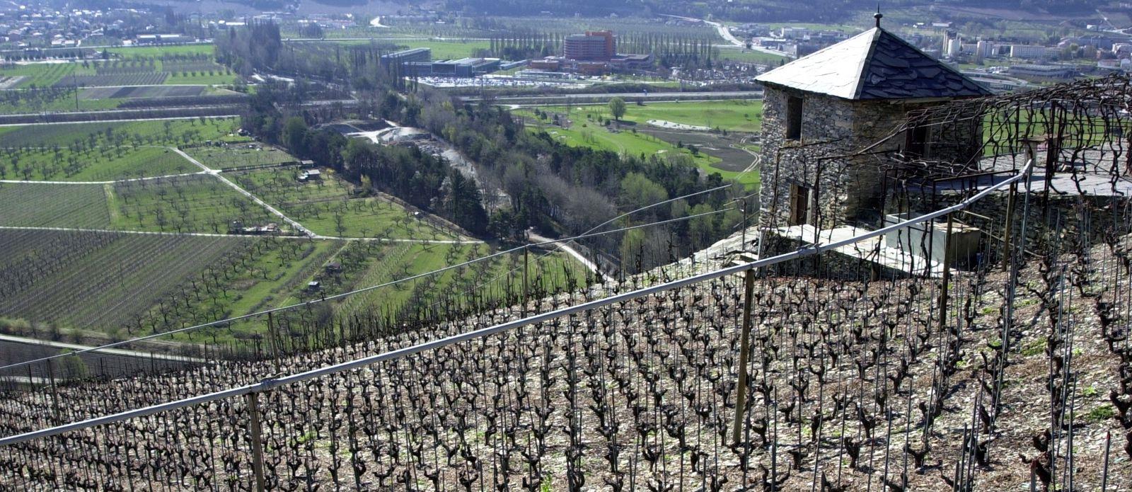 Hommage aux vignerons Valaisans qui ont façonnés grace à leur savoir-faire de magnifiques murs en pierre de taille.