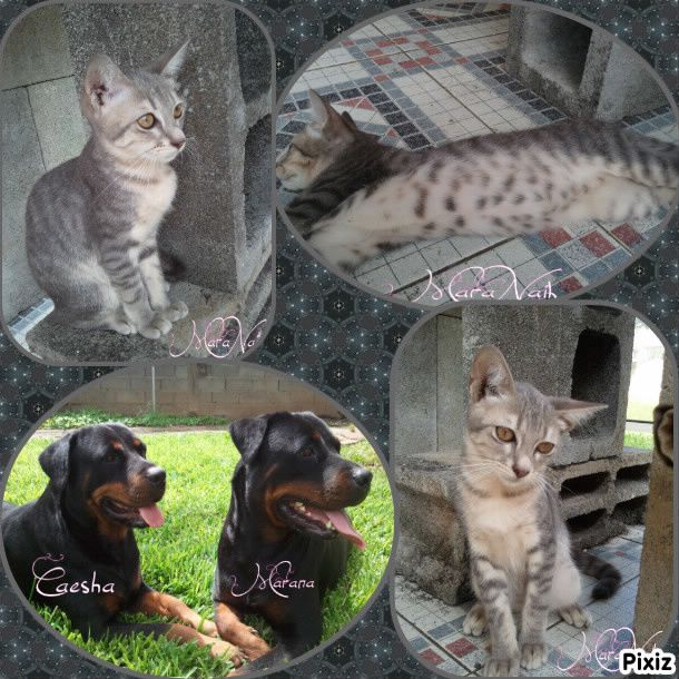 photocollage chien chat