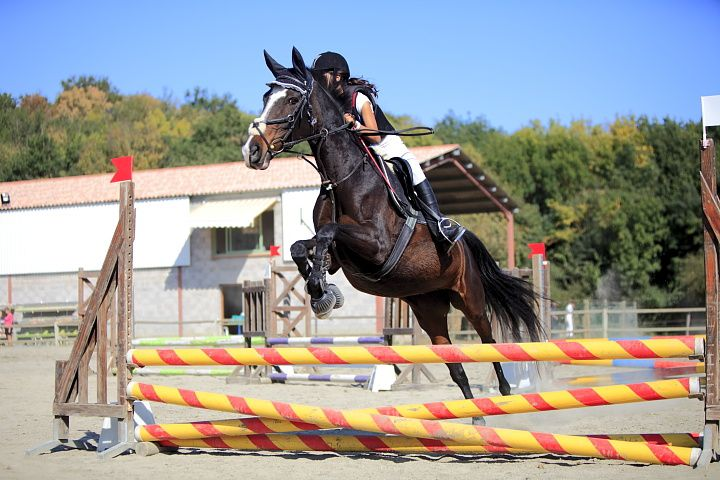Concours-equitation-1 3447 720