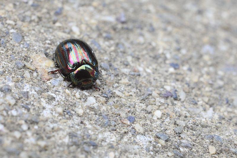Insectes en Macrophotographie
