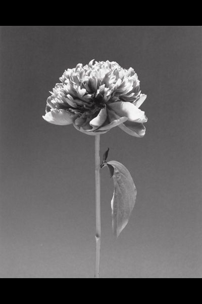 827744_mapplethorpe-coppola.jpg