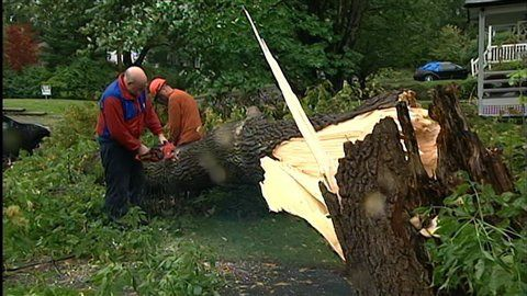 110828 lb0us irene-arbre-estrie 8