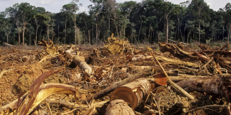 1382_1359_Deforestation-Amazon-1024x667_1_460x230.png