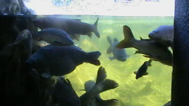 Nos visites à l'Aquarium du Périgord Noir où nous avons vu toutes sortes de poissons et croisé des animaux... bizarres !!!