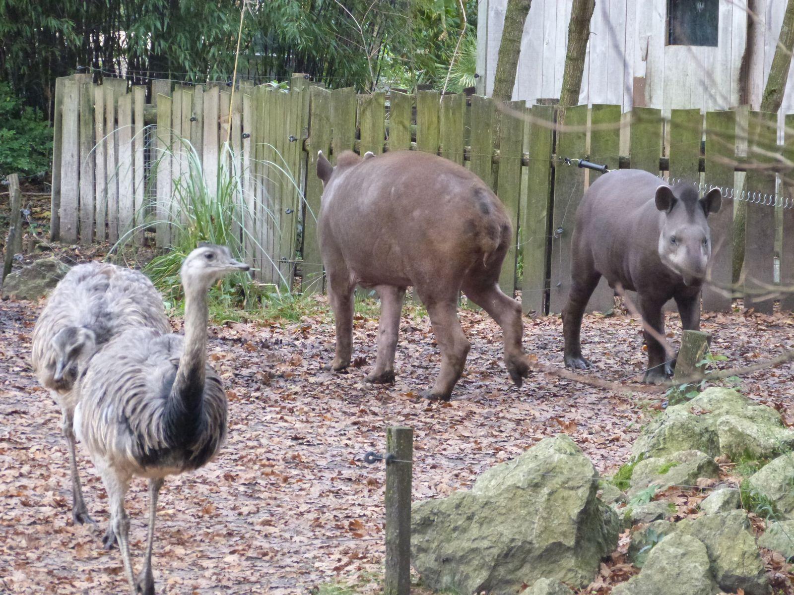 Notre visite au Zoo de pessac, novembre 2012