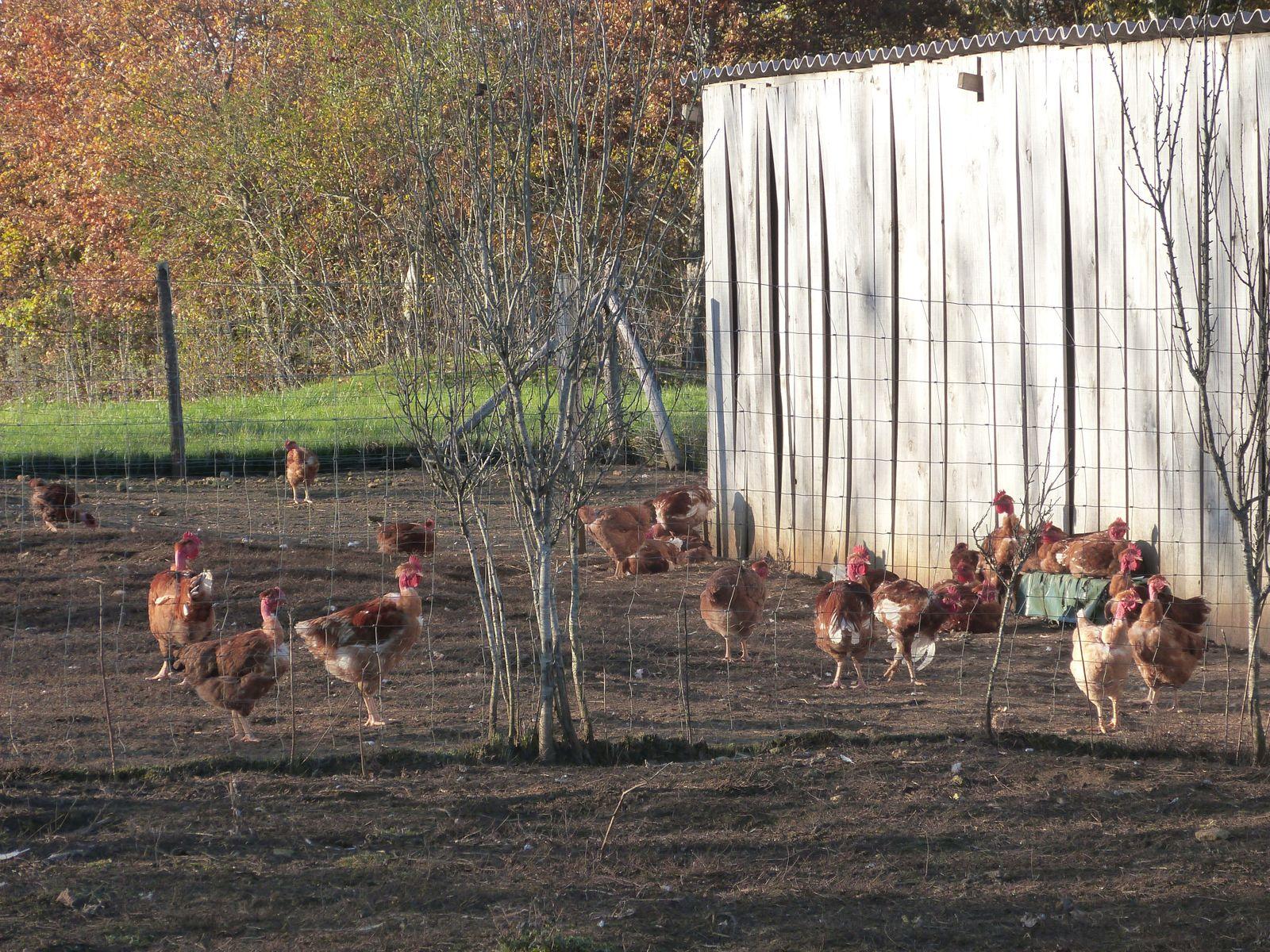 Novembre 2012. Notre visite sur l'exploitation Legay et son élevage de Baudets du Poitou à Fouleix : Angélique, Kamal, Mohamed, Saïd