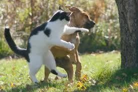 Et le cien devint l'ennemi du chat1
