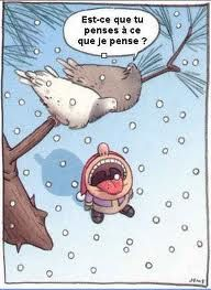humour-pigeons.jpg