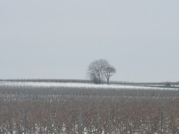 neige5.JPG