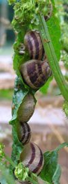 escargot4_grand-copie-1.jpg