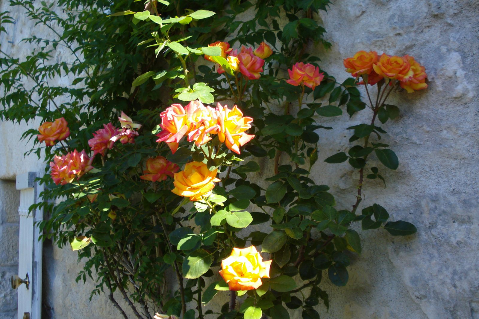 Dimanche pluvieux jardin heureux cagouille 39 s garden for Jardin 00 garden