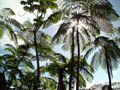 Basse-Terre - Rte traversee - foret tropicale - Guad (1)