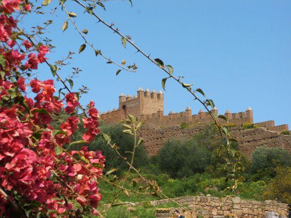 Rabat---necropole-remparts-et-bougainvillier.jpg