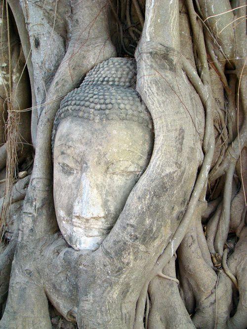 tête buddha--Ayutthaya---Wat-Mahathat-.jpg