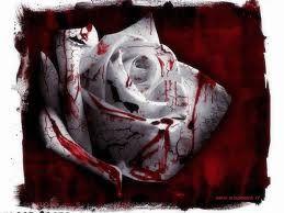 Rosa-copia-1.jpg