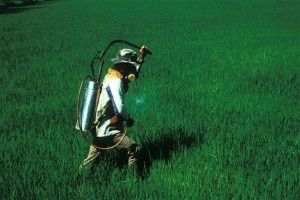 spraying-field-300x200.jpg