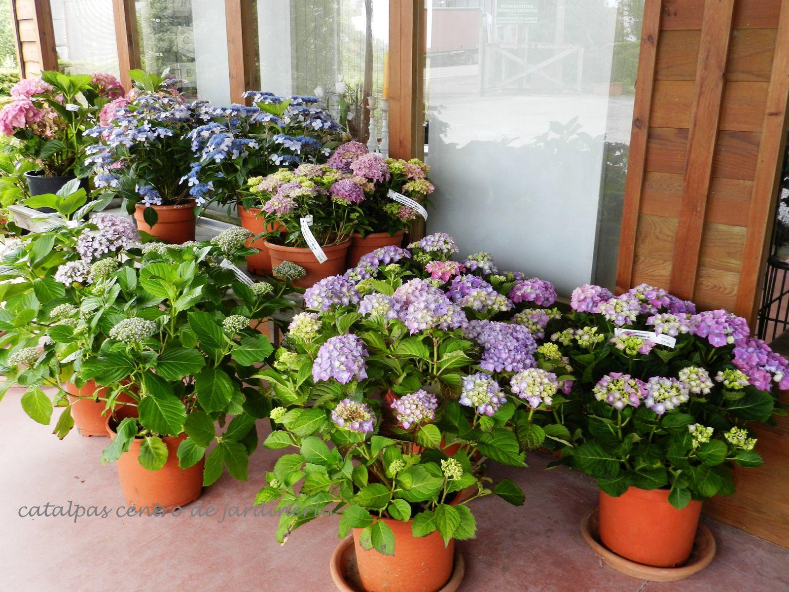 Diferentes variedades. Exposición en nuestro centro de jardinería en junio de 2012.