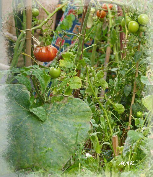 jardin_partage3ab.jpg