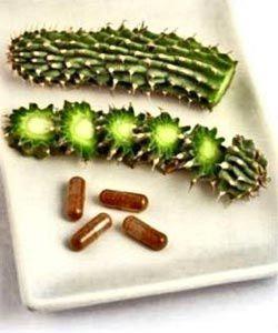 hoodia-gordonii-pills