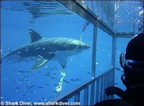 06-Requins 09