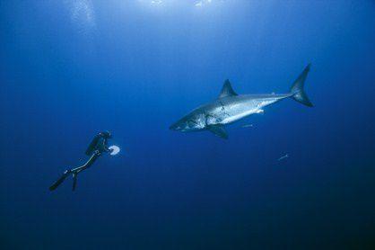 09-Requins 08