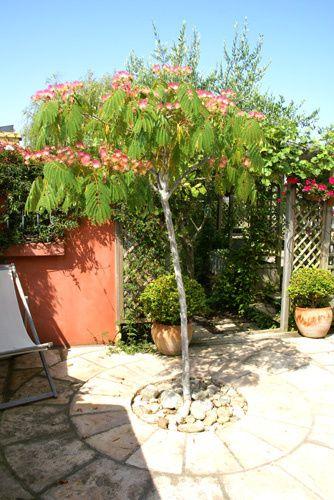 A comme albizia le blog des 7 jardins for Arbre artificiel pour terrasse