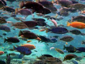 Madagascar va promouvoir l'exploitation de ses ressources halieutiques