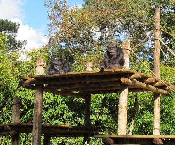zoo parcs animaliers aquariums sur les chemins de. Black Bedroom Furniture Sets. Home Design Ideas