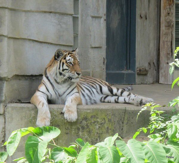 Zoo d'Anvers