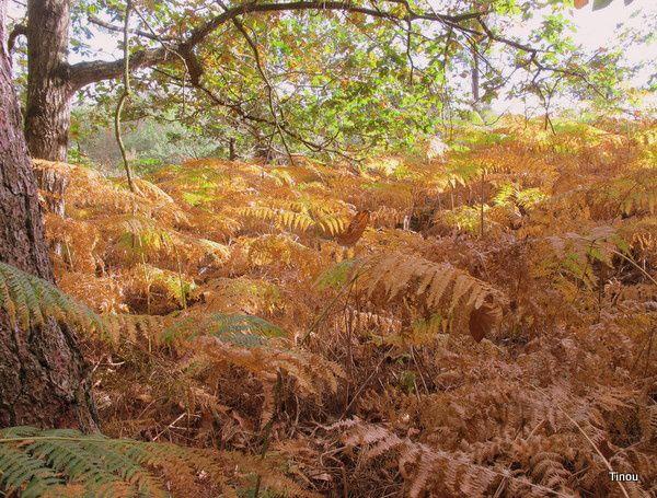 Brocéliande en automne