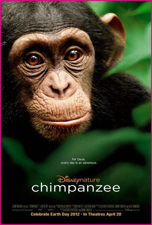 Disneynature-Chimpanzee-Movie-Poster.jpg