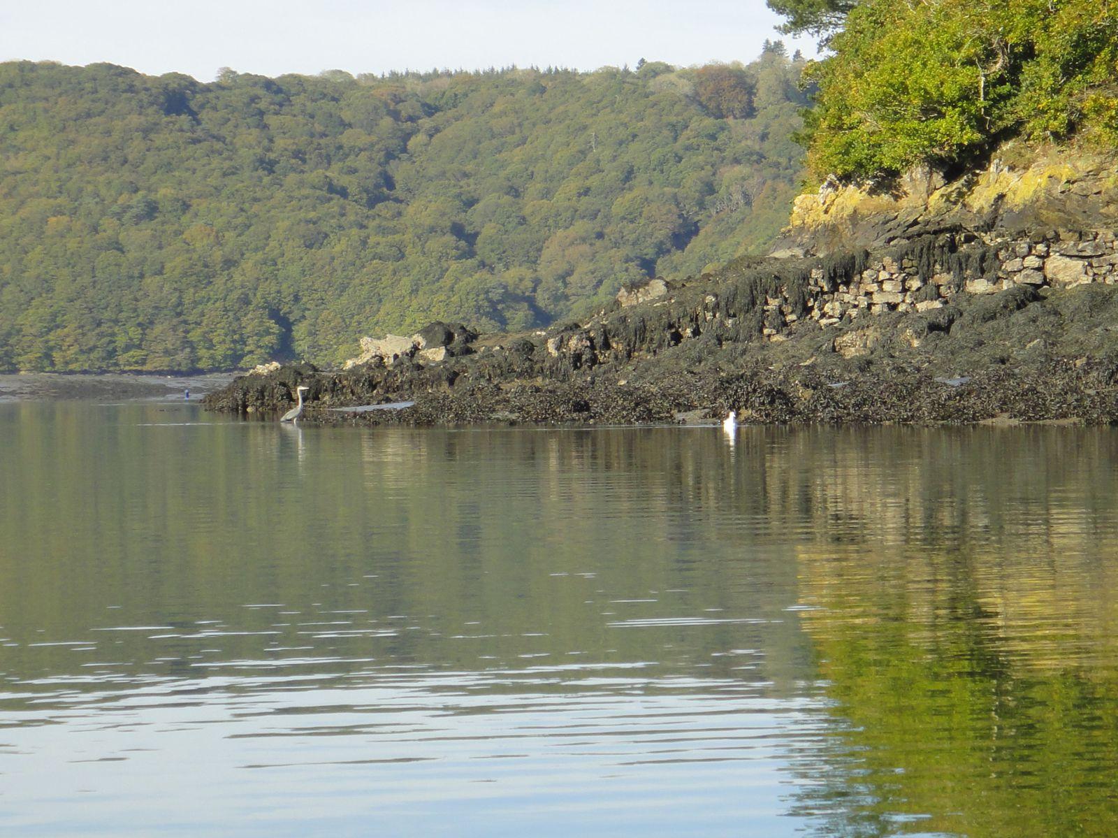 Par une belle journée d'automne, le découverte de l'Aulne maritime.