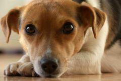 SanteVet_chien_batard_Fotolia.com_s.jpg