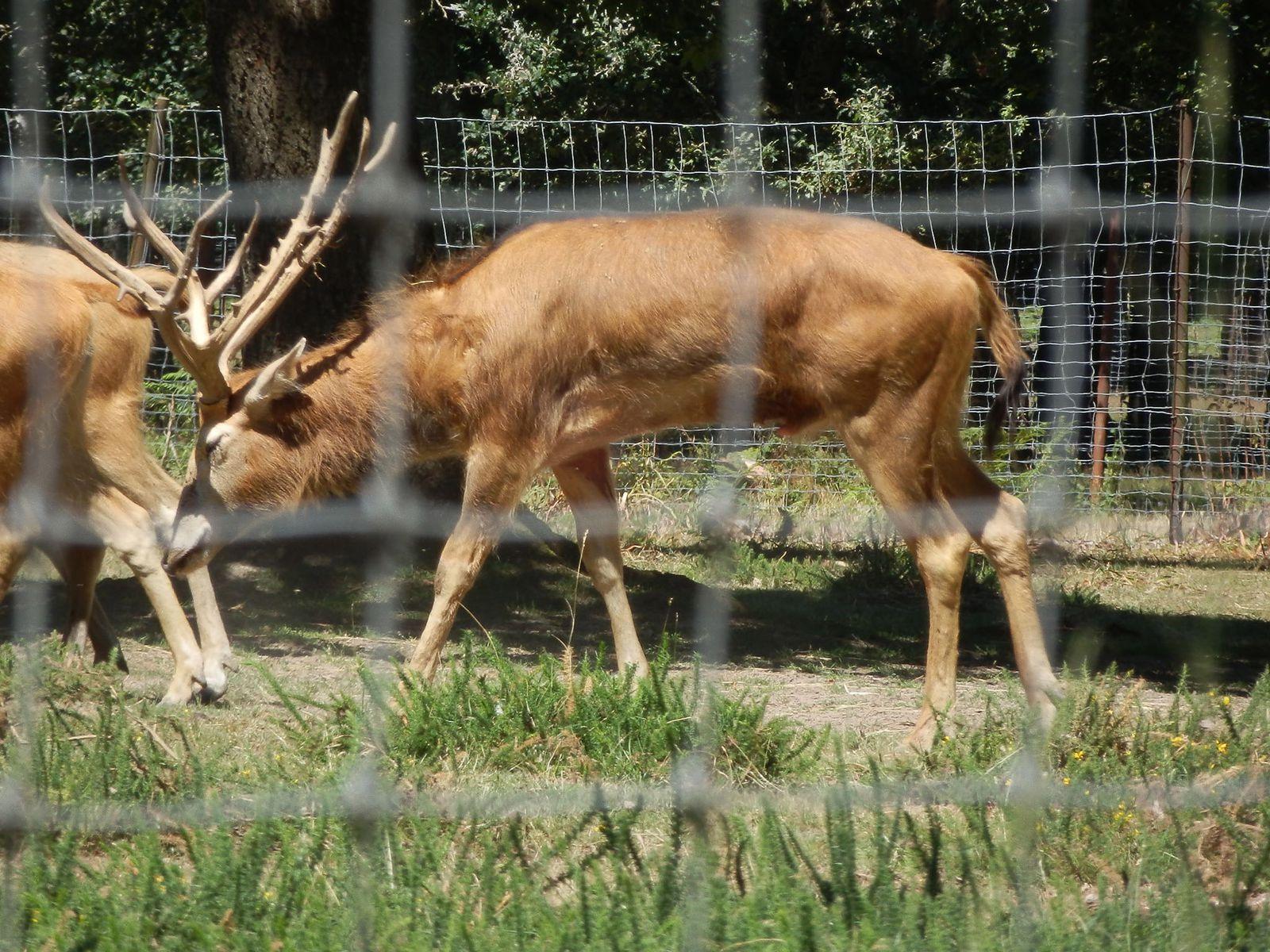 Parc animalier de la haute touche 7 indre le blog for Zoo haute touche