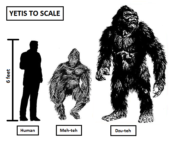 yeti-scale.png